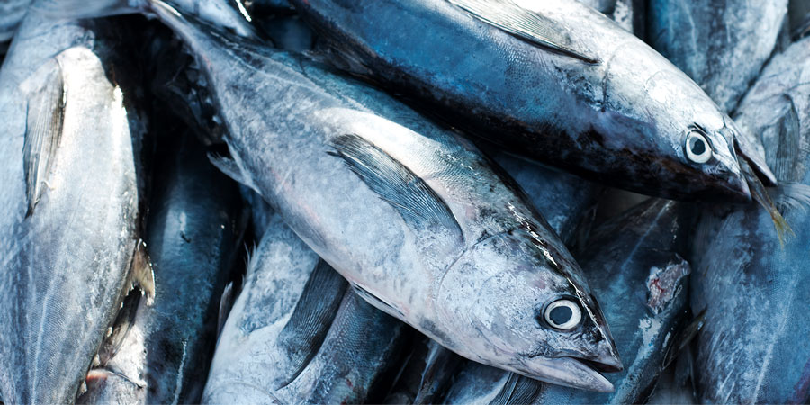 Diferencia entre atún y bonito