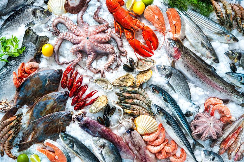 conserva pescado